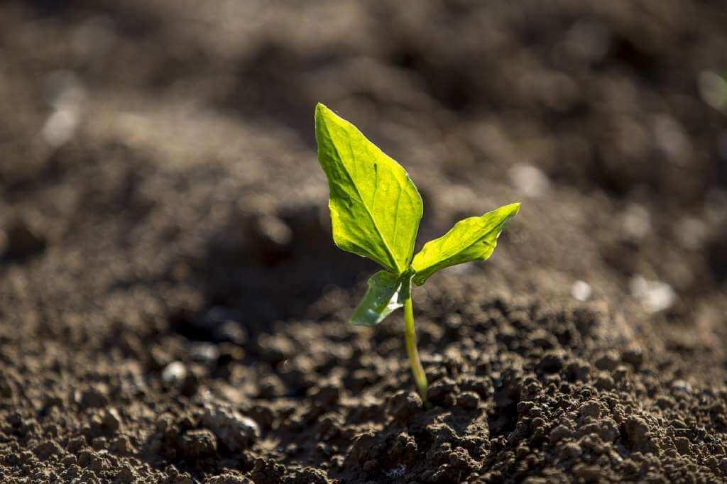 На фото растение растет на земельном участке.